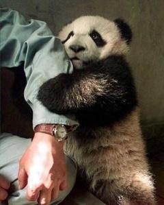 Ceci est un panda apeuré. Il n'a aucune valeur ajoutée dans cet article mais il est trop cuuuute !
