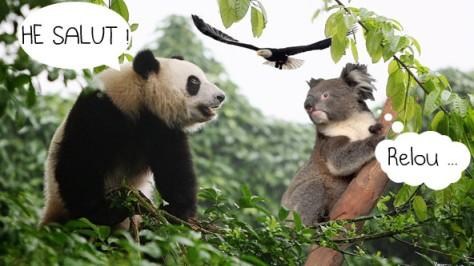 Panda + Koala
